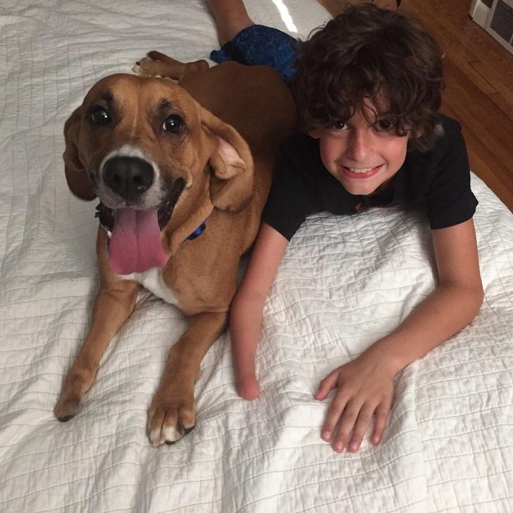 24 chiens qui aiment tellement leurs humains que leurs regards valent mieux que des mots