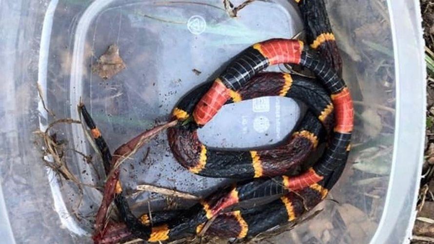 Ce pitbull est mort après avoir protégé de jeunes enfants des morsures d'un serpent