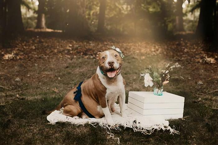 Ce pitbull a participé à sa propre séance photo de maternité et elle est resplendissante