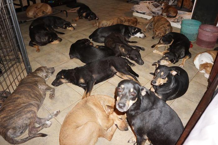 Cette femme a abrité 97 chiens errants dans sa maison alors qu'une tempête de catégorie 5 faisait rage à l'extérieur