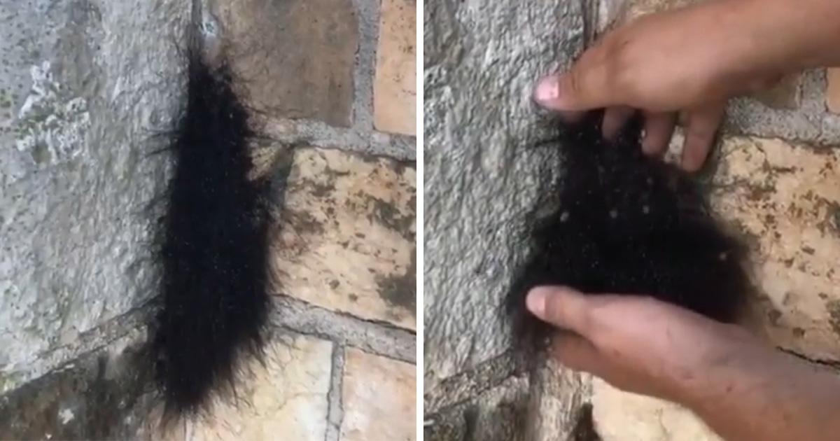 Ce gars a ramassé un «animal ressemblant à une boule de poils» et l'a vu se disperser en centaines d'araignées