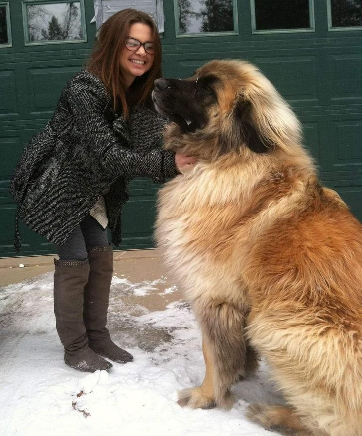 24 personnes qui voulaient un chien, mais qui se sont plutôt retrouvées avec un ours