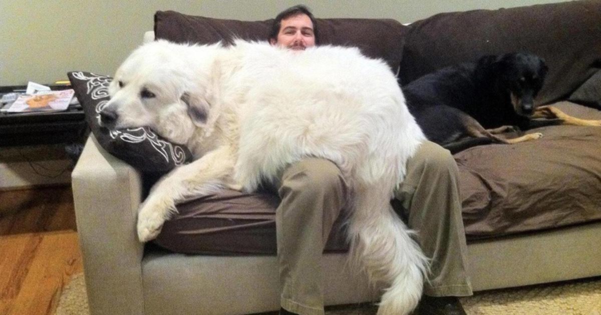 24 personnes qui voulaient un chien, mais se sont retrouvées avec un ours