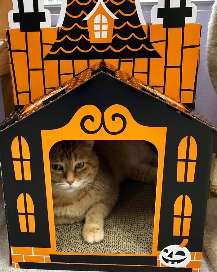 Ces mini maisons hantées pour chats sont parfaites pour l'Halloween