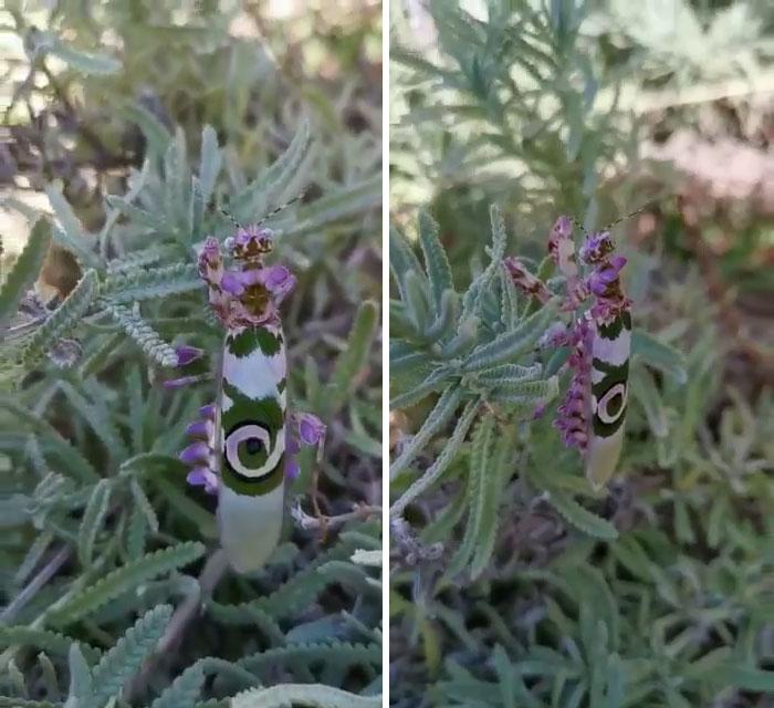 Cette femme a trouvé un insecte que même les personnes détestant les insectes pourraient trouver joli