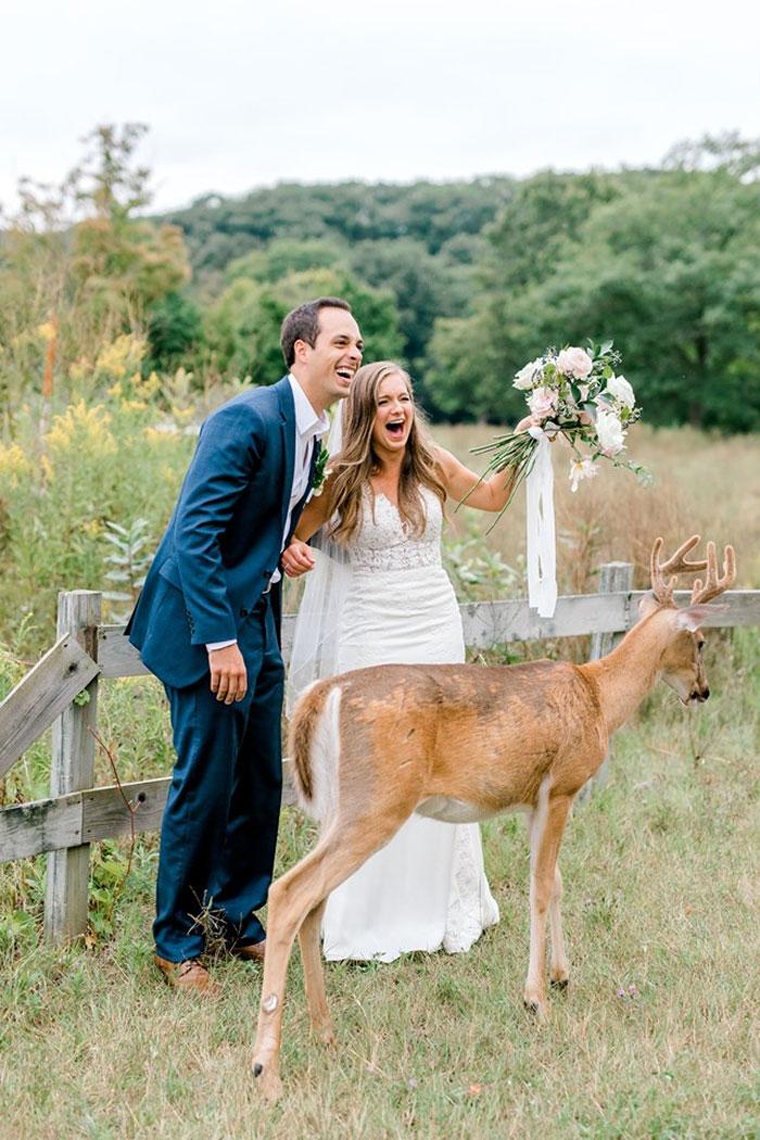 Une séance photo de mariage a été interrompue par un cerf et ces 15 images sont vraiment drôles et adorables