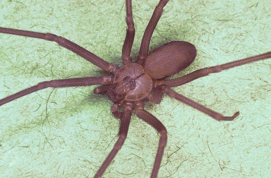 Cet expert vous exhorte à ne pas tuer les araignées qui vivent dans votre maison