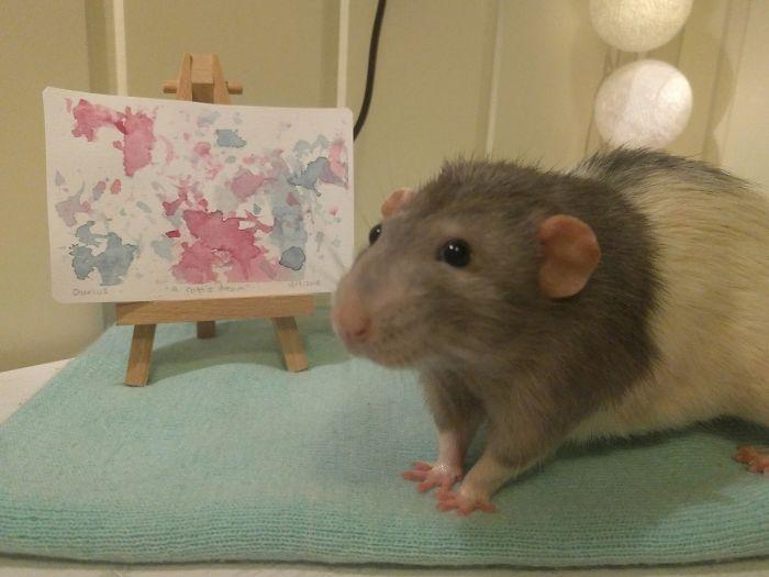 Si vous n'avez pas souri aujourd'hui, voici Darius, le rat qui a appris à peindre