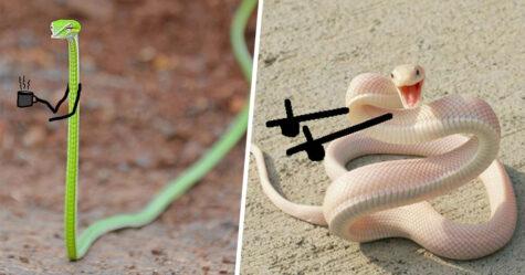 22 personnes ont griffonné sur des images de serpents et les scénarios sont vraiment drôles