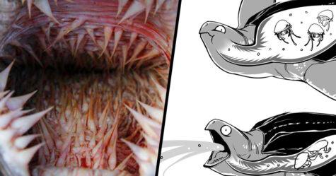 Les tortues marines ont une gueule terrifiante et cette personne explique l'aspect scientifique de leur bouche