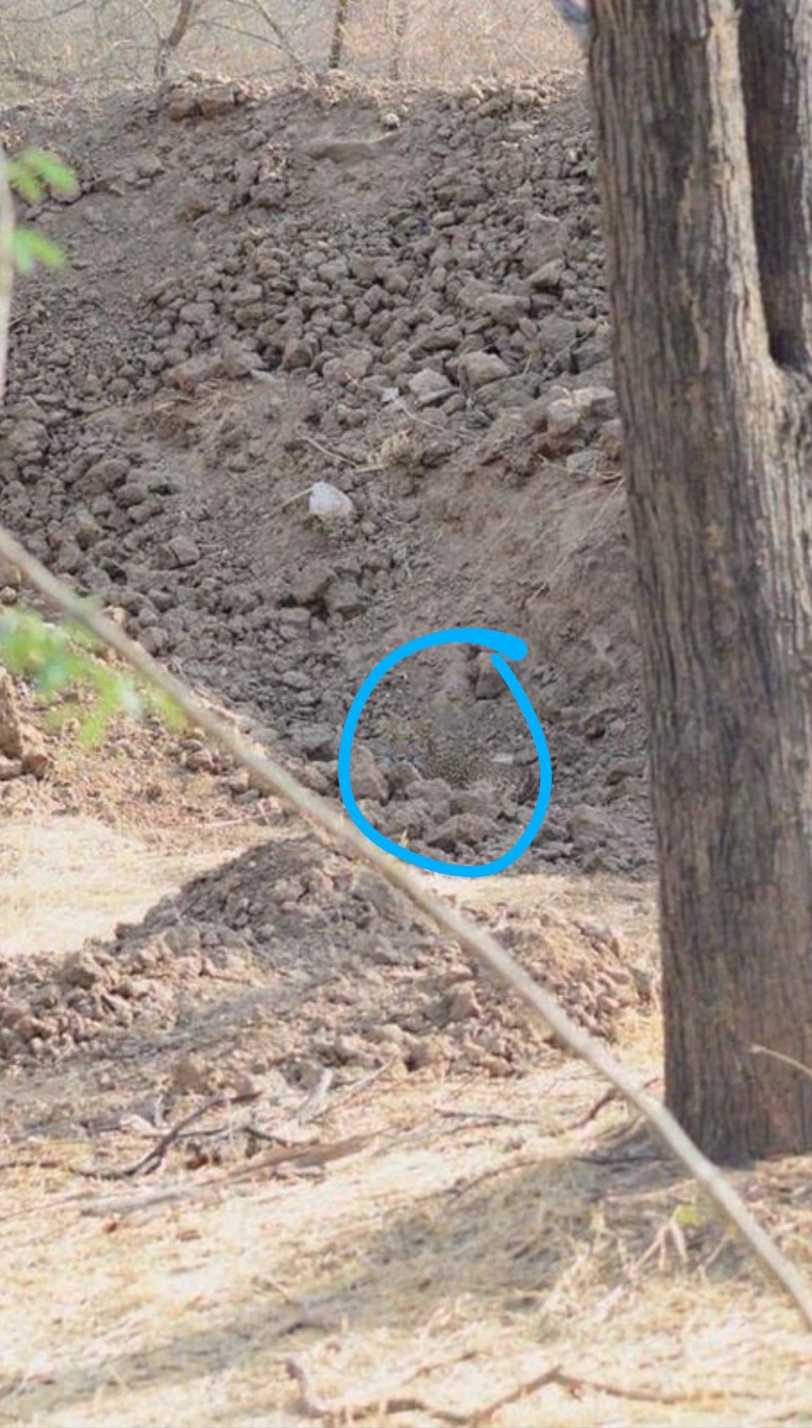 Les gens peuvent voir le léopard instantanément ou pas du tout dans cette image