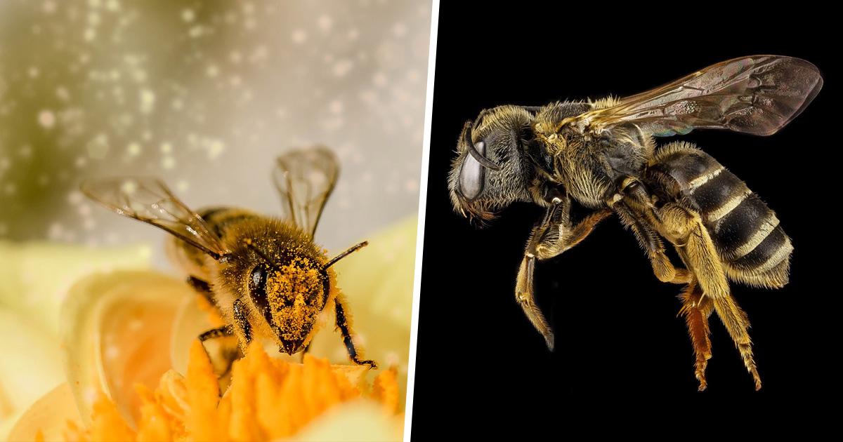 Les abeilles ont été déclarées la chose la plus importante sur Terre