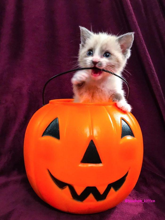 Ce chaton adoptif a fait le sourire le plus mignon lors d'une séance photo et a envahi Internet