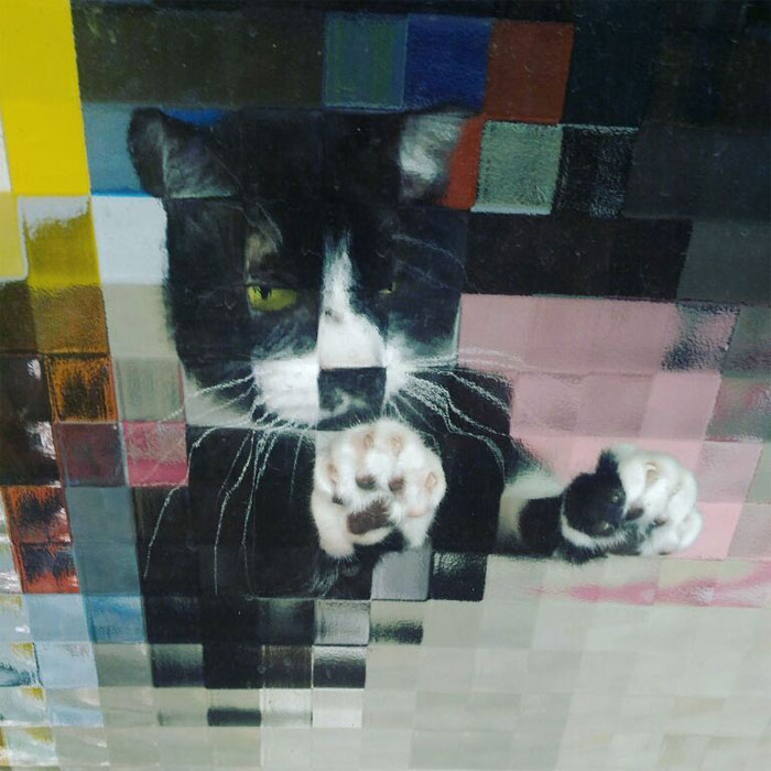22 fois où des gens ont aperçu des chats pixelisés dans la vraie vie