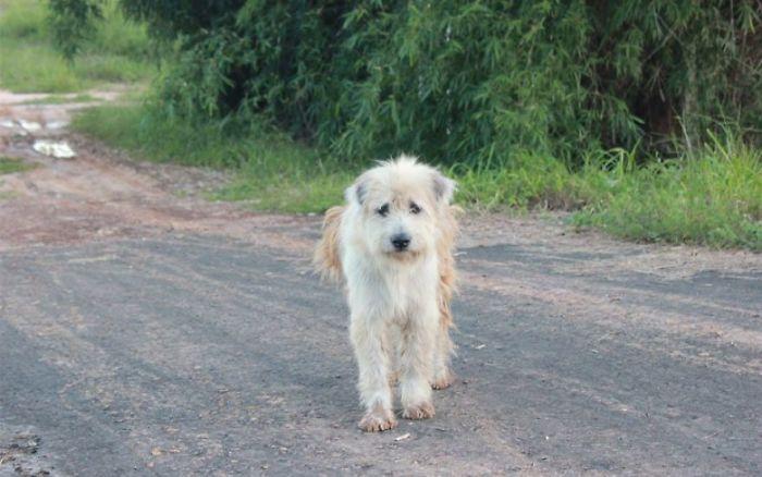 Ce chien a attendu 4 ans au même endroit jusqu'à ce qu'il soit enfin réuni avec les propriétaires qui l'avaient perdu