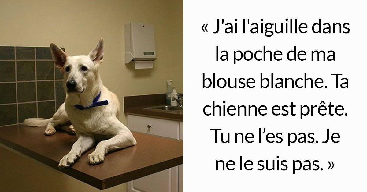 Ce message déchirant sur l'euthanasie qu'une vétérinaire doit effectuer est devenu viral