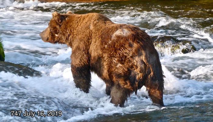 Ce parc national a organisé un concours de l'ours le plus obèse et voici les 8 nounours les plus dodus
