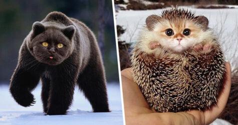 Quelqu'un a imaginé à quoi ressembleraient les choses si elles avaient une face de chat et le résultat est vraiment drôle, mais perturbant (22 images)