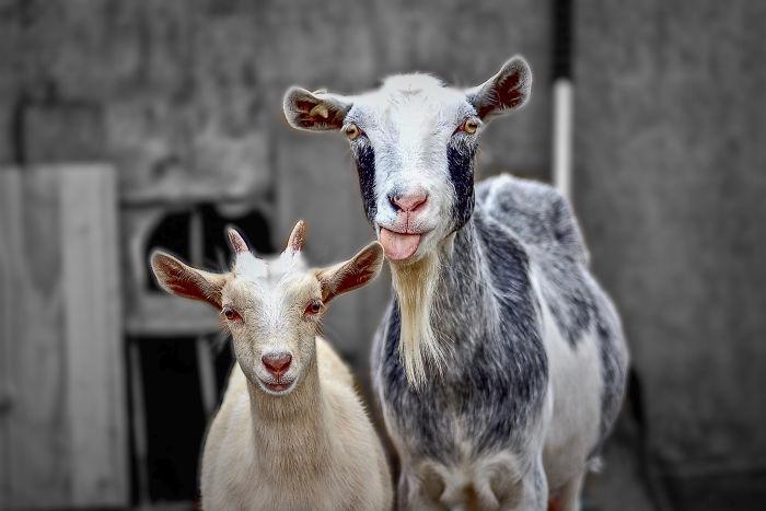22 faits intéressants sur les animaux que tu peux mentionner lors de conversations informelles