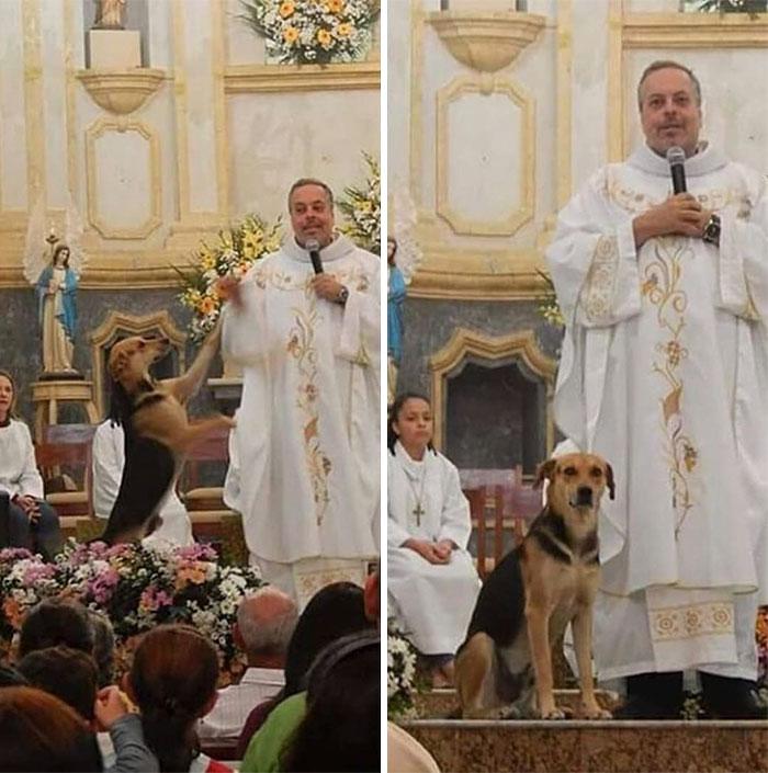 Ce gentil prêtre amène des chiens errants à la messe pour qu'ils puissent se trouver de nouvelles familles