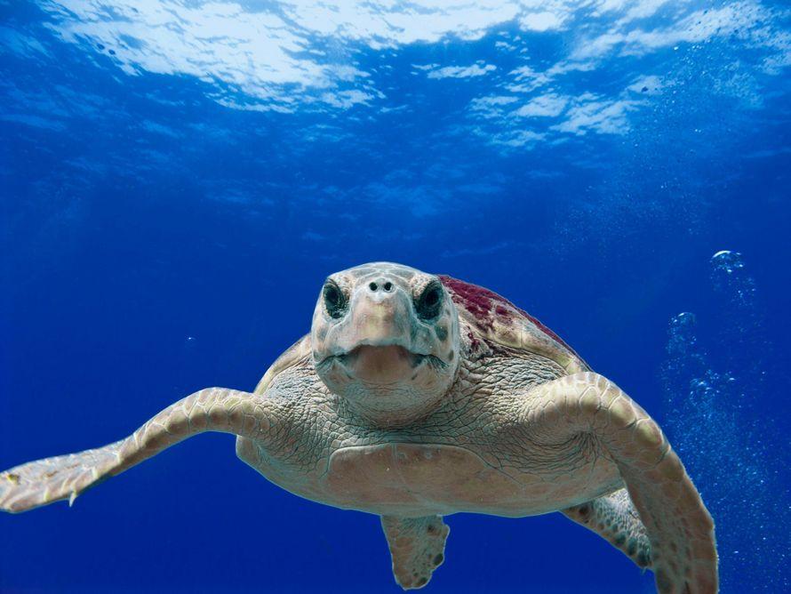 Une tortue retrouvée morte avait ingéré 104 morceaux de plastique — Floride