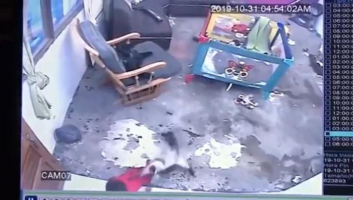 Cette séquence montre un chat qui court et sauve un bébé sur le point de tomber dans les escaliers