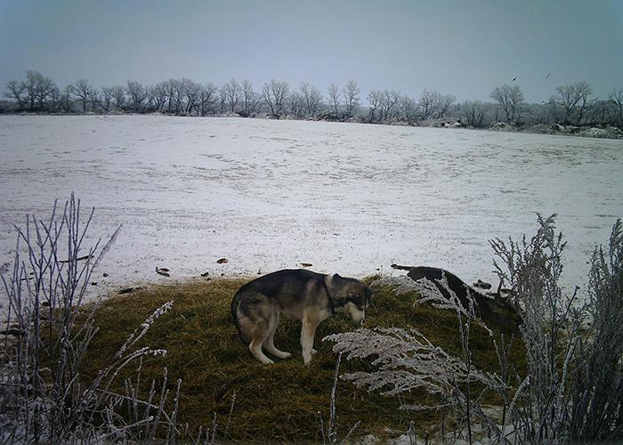 Cette chienne s'est sauvée de chez elle et a été filmée par une caméra cachée errant dans la forêt avec un cerf sauvage