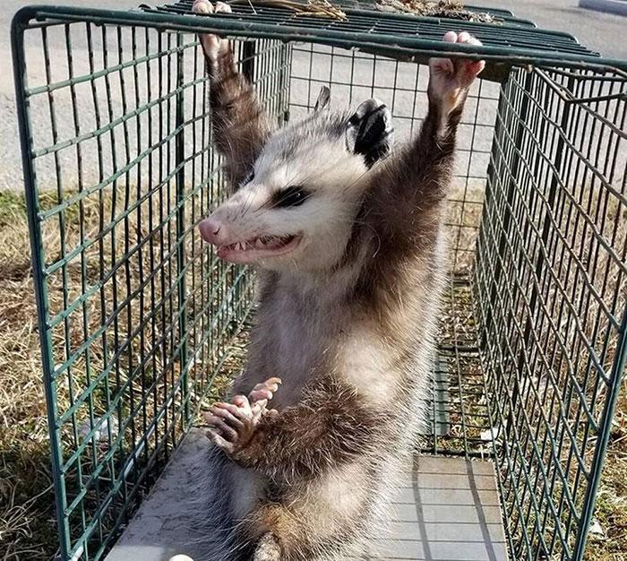 22 faux faits sur les animaux qui vont te faire rire