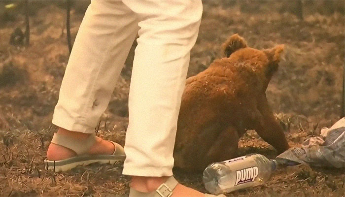 Cette femme a sauvé un koala brûlé et hurlant avec sa propre chemise