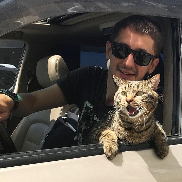 Un homme dissimule un gros chat dans un avion et est puni par la compagnie aérienne après l'atterrissage