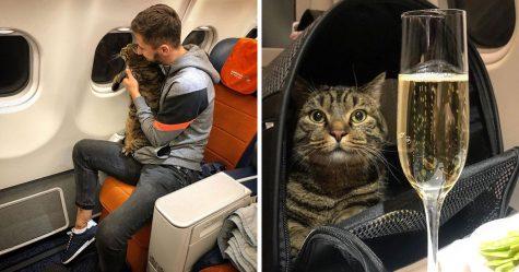 Ce gars a dissimulé un gros chat dans un avion et s'est fait punir par la compagnie aérienne après l'atterrissage