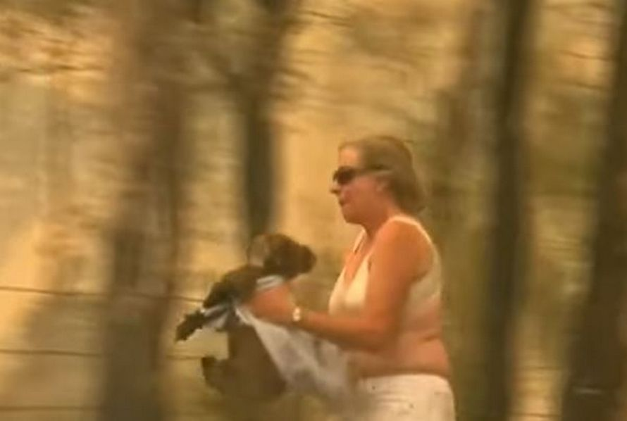Le koala sauvé des feux de forêt par une femme est mort