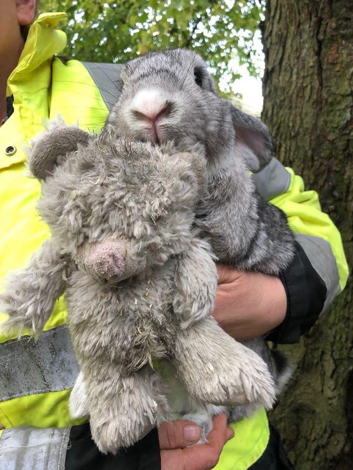 Des secouristes ont sauvé un lapin abandonné accroché à son ours en peluche