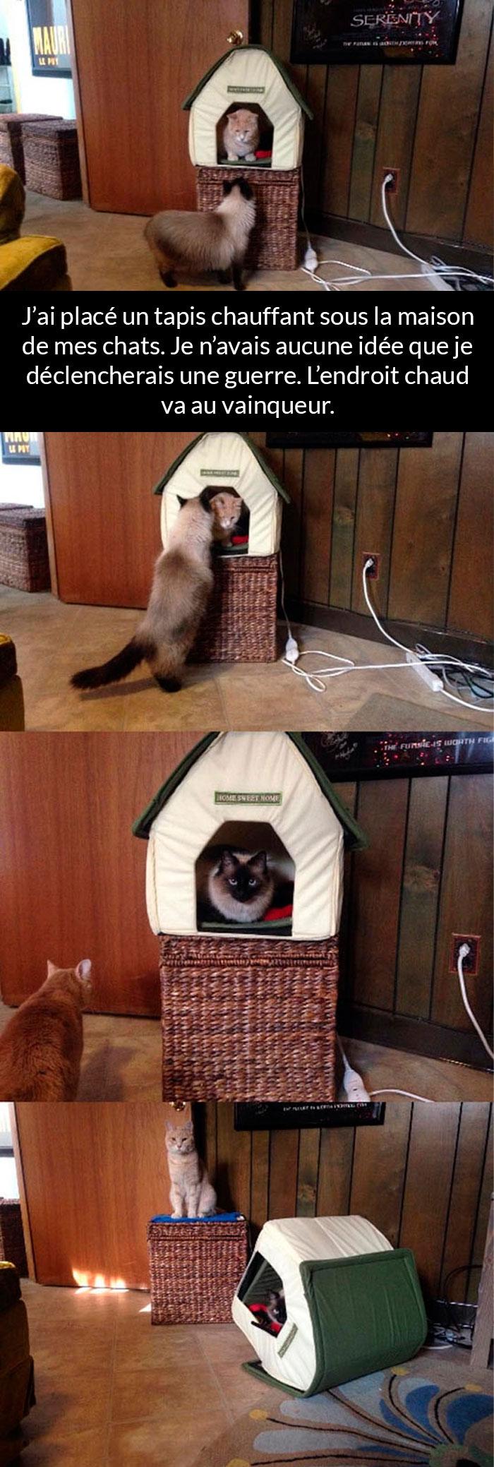 25 photos de chats avec des messages hilarants qui vont te faire sourire (nouvelles images)