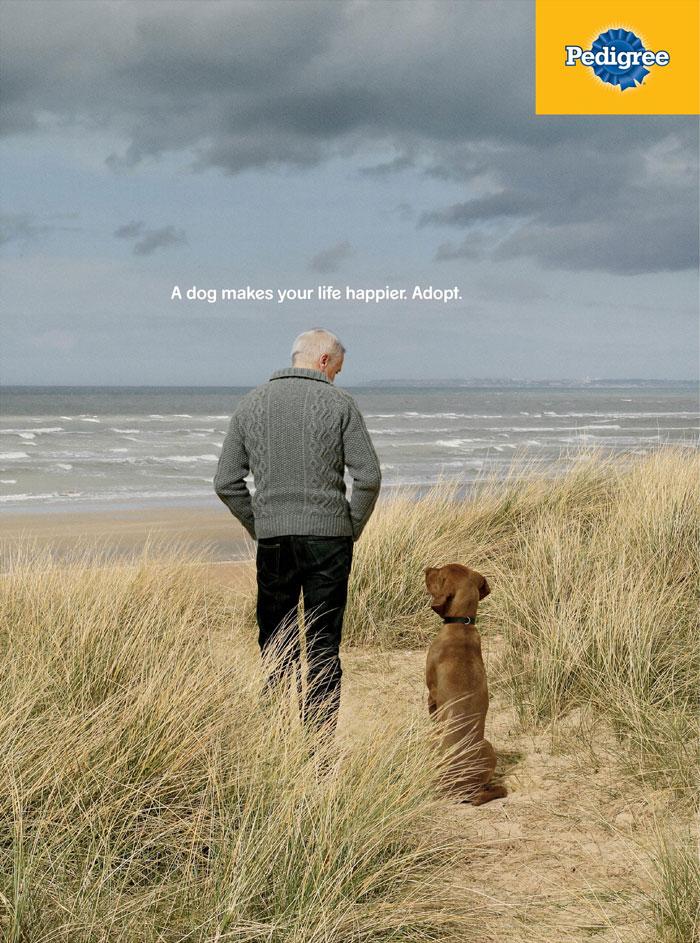 Ces campagnes publicitaires expliquent comment un chien peut transformer la vie d'une personne (16 images)