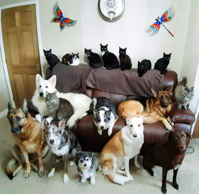 Une femme a enfin réussi à faire asseoir ses 17 animaux de compagnie pour une photo