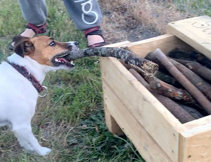 Un homme a construit une «bibliothèque de bâtons» pour tous les chiens du parc