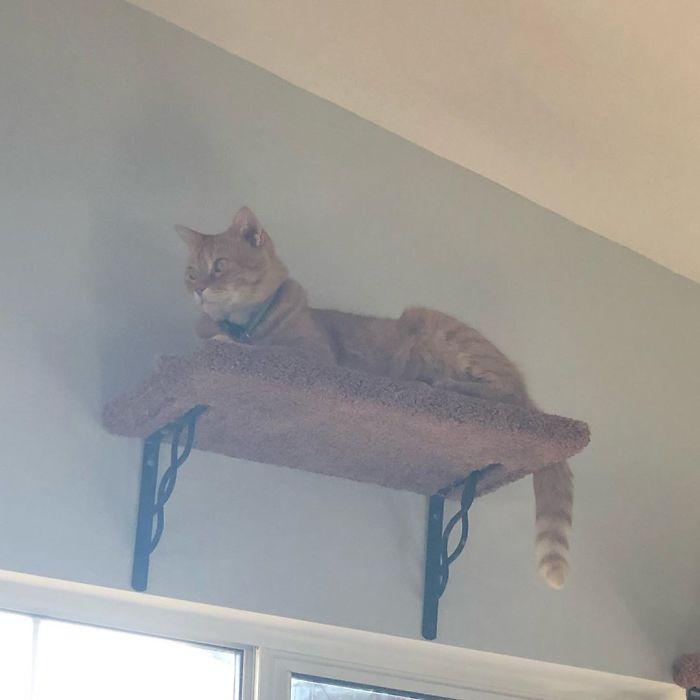 Ce chat dit «Well, hi» avec un accent du sud et les gens n'arrêtent pas de le regarder encore et encore