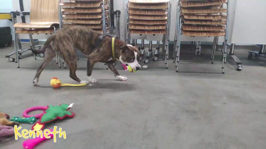 35 chiens ont pu choisir leurs cadeaux de Noël dans ce refuge pour animaux, et voici ce qui s'est passé
