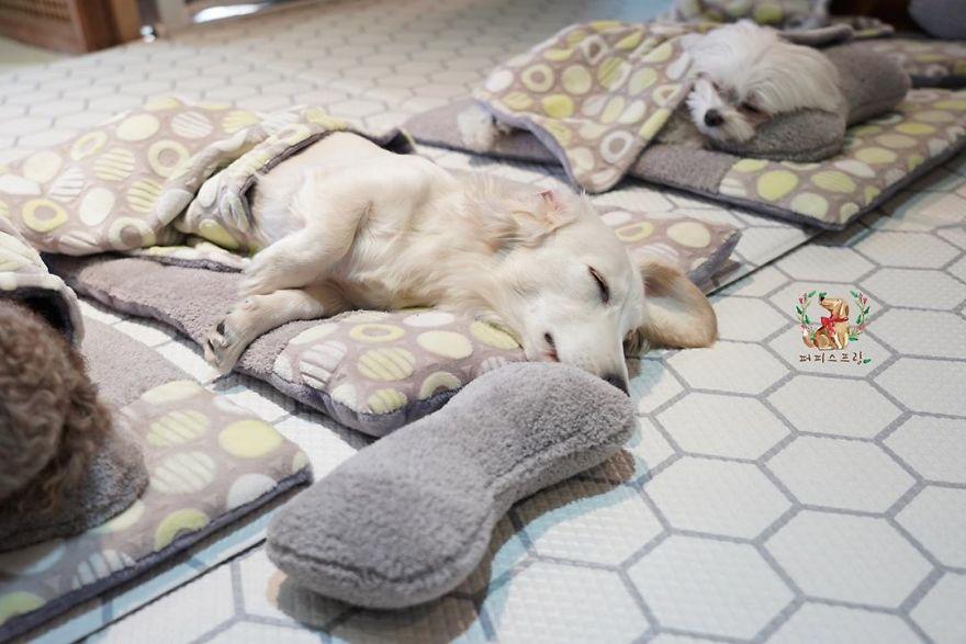 Ces 24 photos de chiots endormis dans une garderie pour chiots envahissent Internet