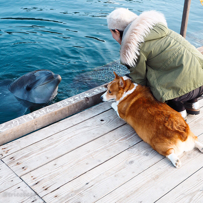 33 meilleures photos d'un corgi adorable qui a 50000 abonnés sur Instagram