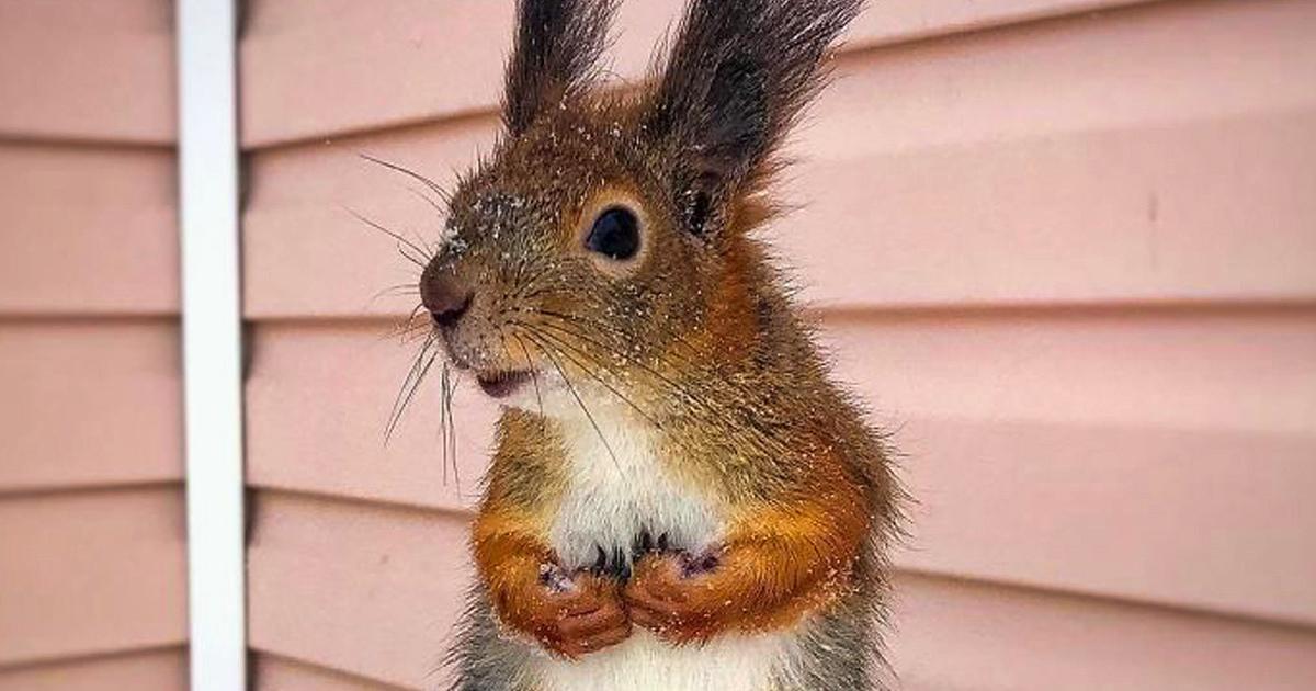 Un gars trouve un bébé écureuil qui ne sait pas marcher, le ramène chez lui et maintenant, ils sont meilleurs amis (26 images)