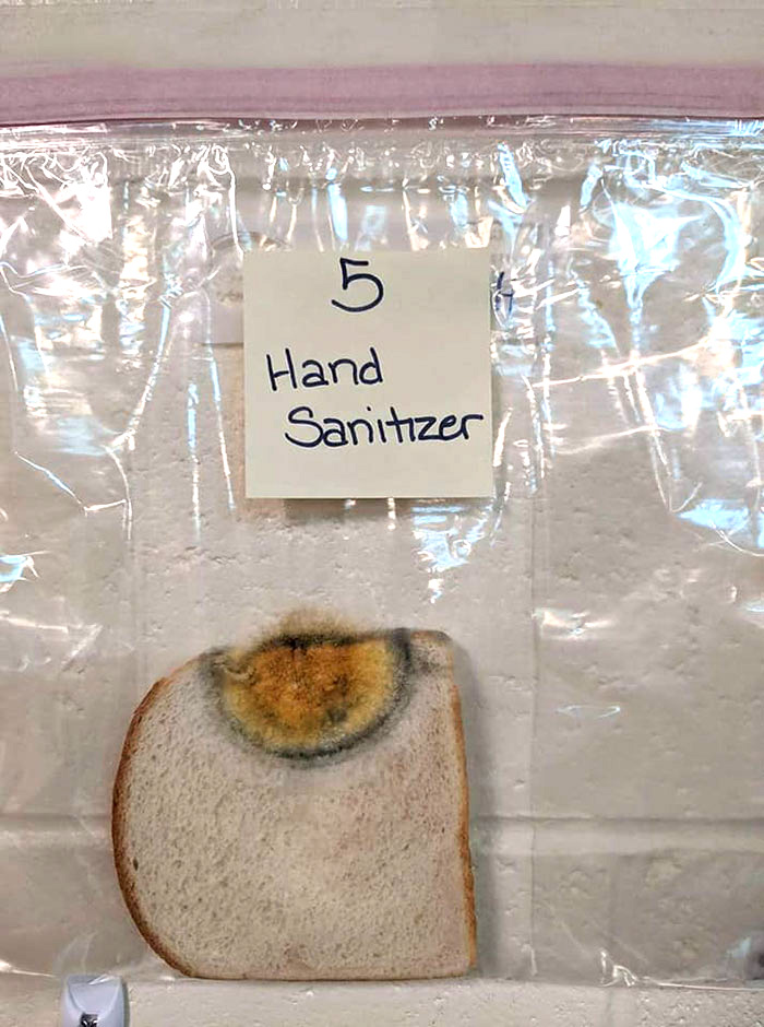 Cette expérience scientifique menée par une école primaire avec du pain blanc est devenue virale
