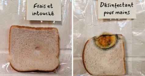 L'expérience scientifique d'une école primaire avec du pain blanc est devenue virale