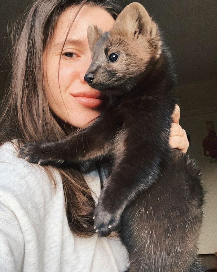 Une femme a sauvé cette zibeline, lui a évité de devenir le manteau de quelqu'un et a décidé de la garder comme animal de compagnie puisqu'elle ne peut pas vivre à l'état sauvage