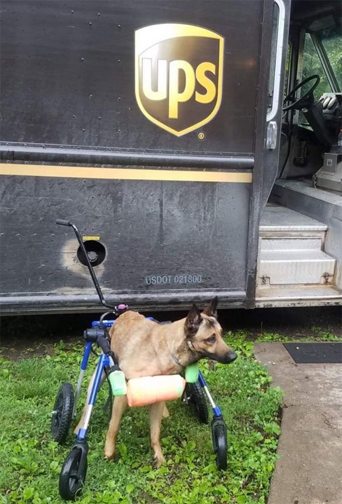 Des livreurs ont créé un groupe Facebook au sujet des chiens qu'ils rencontrent sur leur route et ça va te faire sourire (nouvelles images)