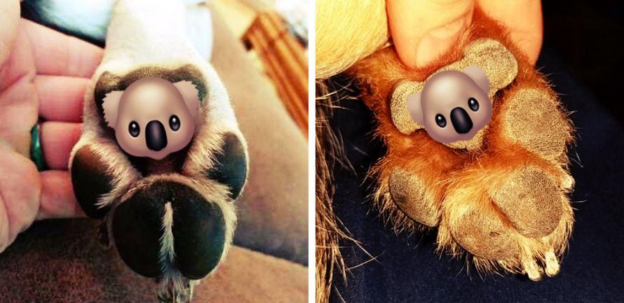 Les pattes de chien ressemblent à des koalas et ça ne s'effacera plus jamais de ta mémoire