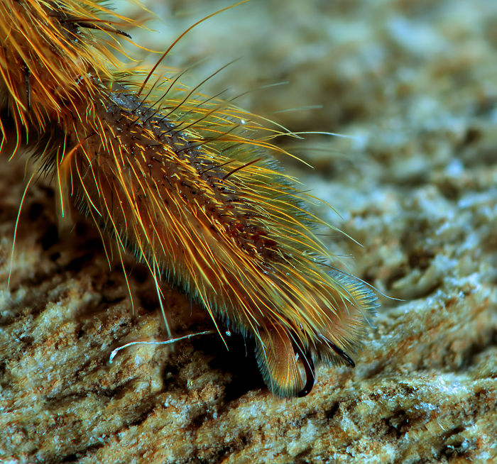 Il s'avère que les araignées ont de minuscules pieds et cela pourrait changer la façon dont vous les percevez (33 images)