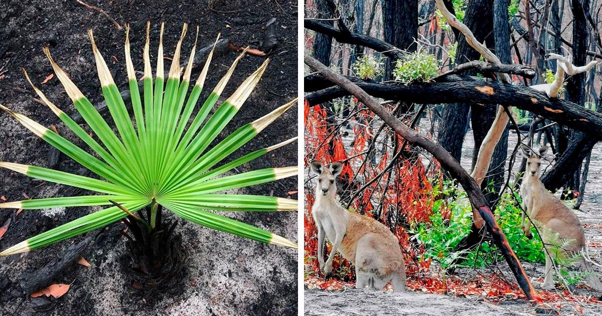 La vie revient lentement sur les terres australiennes brûlées et voici 30 photos pleines d'espoir