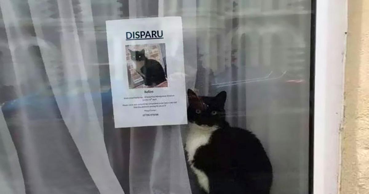 Ce chat disparu a été retrouvé près de sa propre affiche «chat disparu»